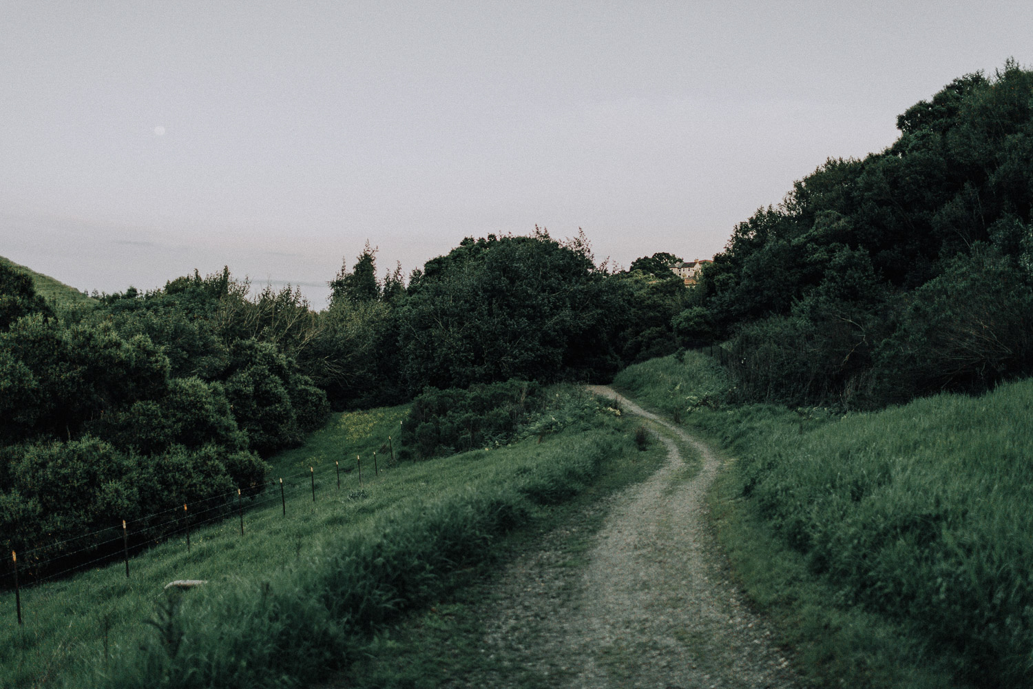 Image of trail covered by green grass