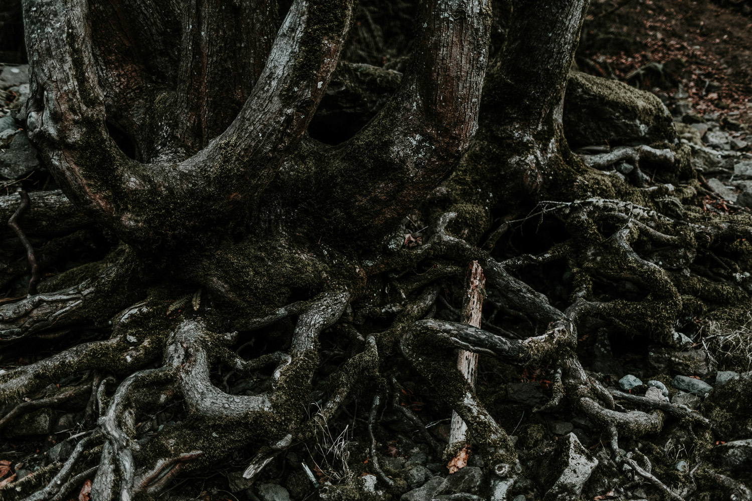 Image of tree roots on the ground