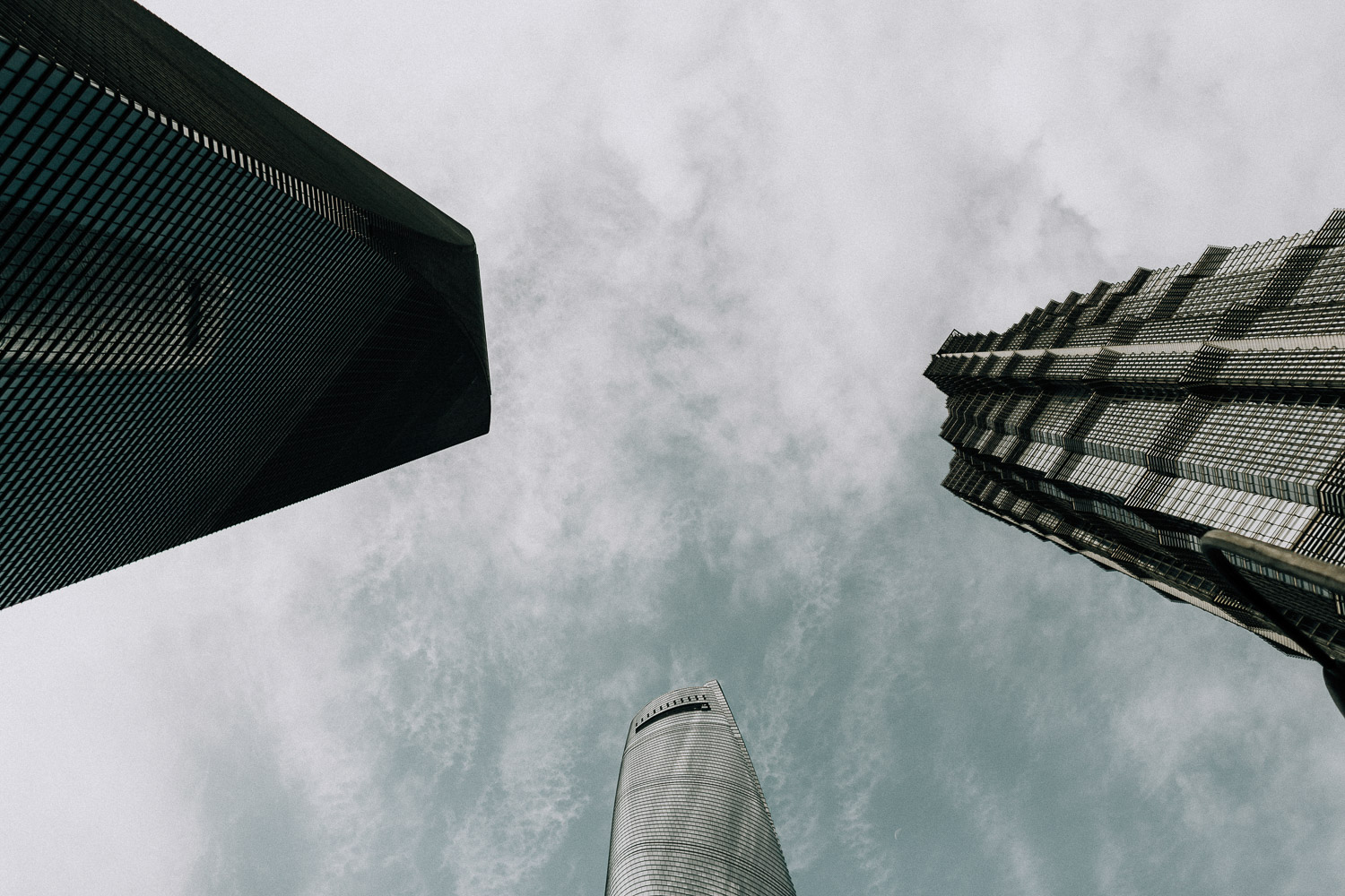Image of tree tall buildings